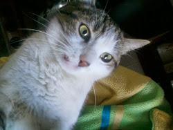 la mia gattina