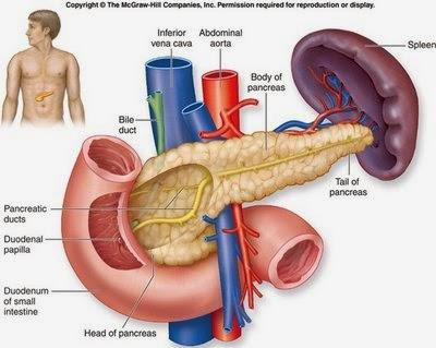 Cara Alami Menyembuhkan Diabetes Melitus