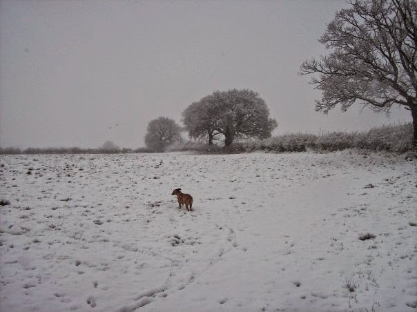 Friars Oak Fields snow 1