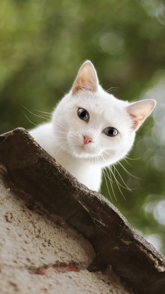 White Cat Look Galaxy Note HD Wallpaper