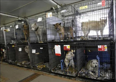 Pet Saver At Fukushima Daiichi nuclear Power Plant