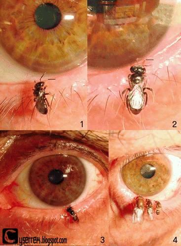 http://2.bp.blogspot.com/-hC6jj2D_eEE/T6ad92gcU7I/AAAAAAAAA7o/hwUdX-Wc9lw/s400/eye-bee.jpg