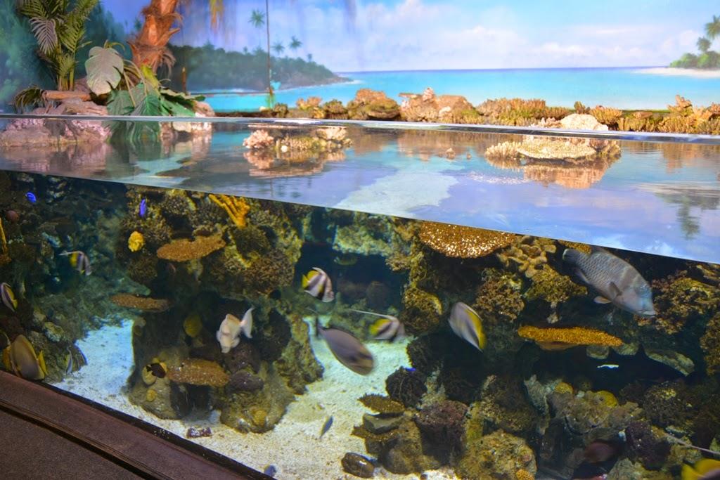Barcelona Aquarium under water