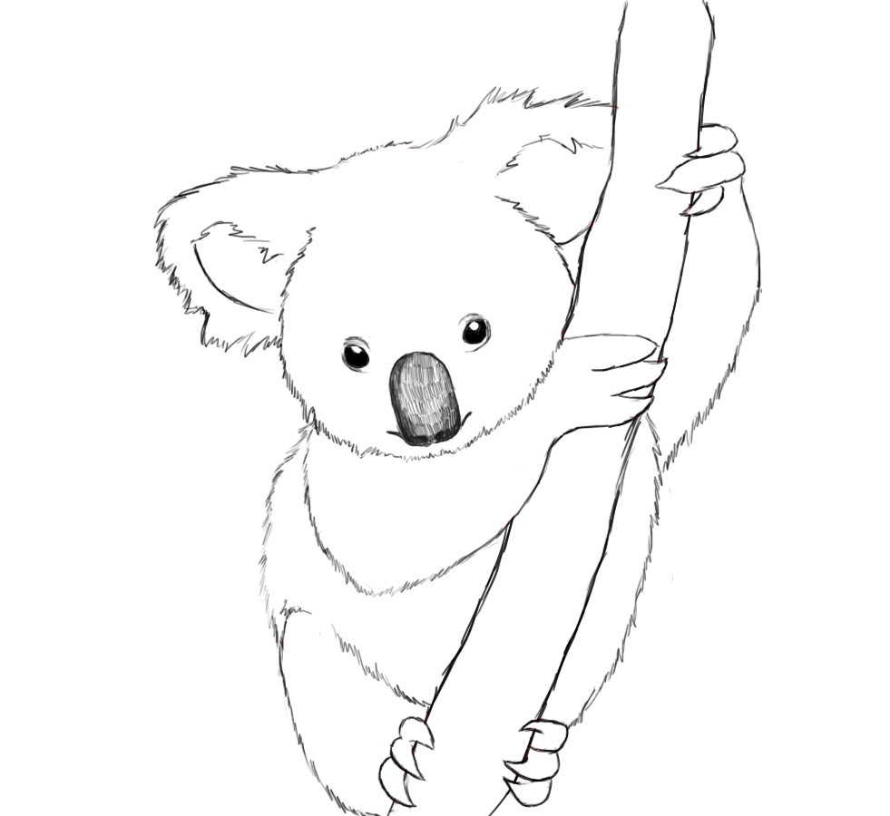 Uncategorized Draw Koala how to draw a koala central after you darken in the koalas eyes and nose erase all outlines replace them with jagged lines make your look fuzzy