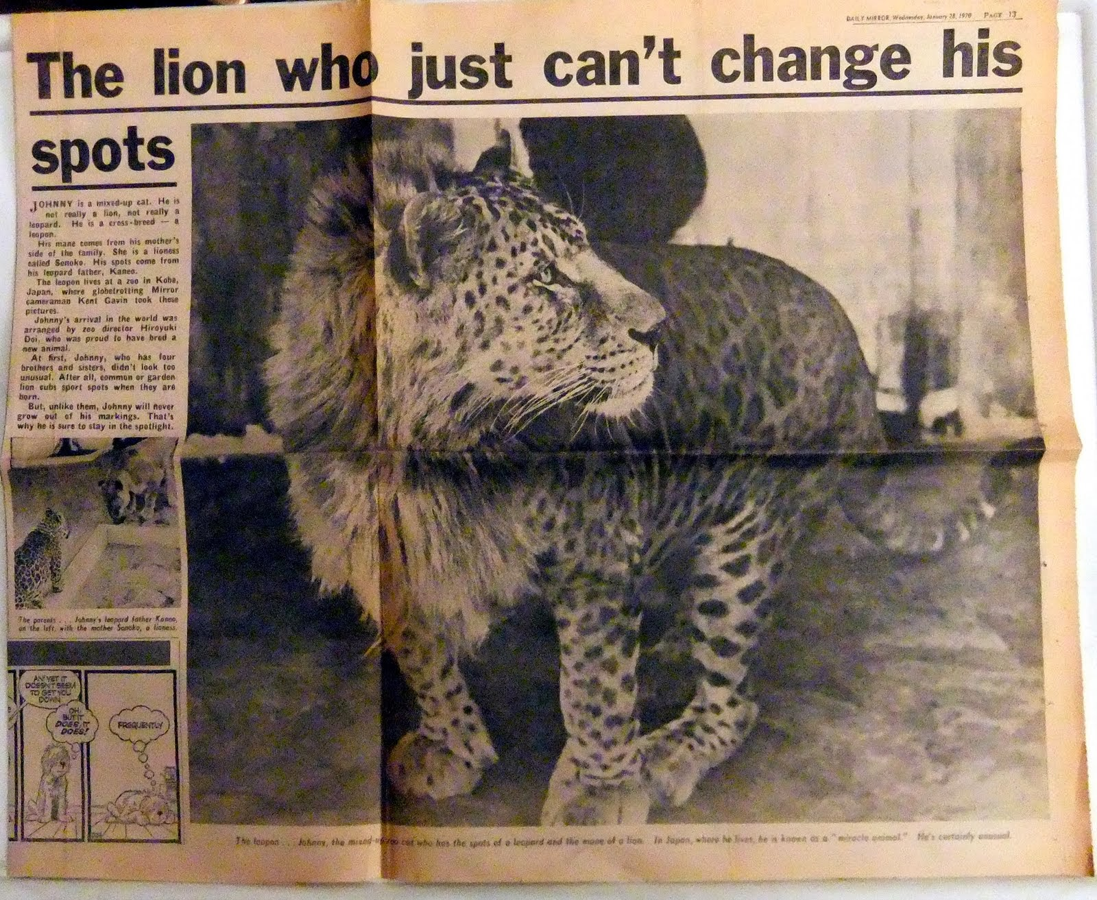 Leopon+newspaper+article,+Daily+Mirror+2