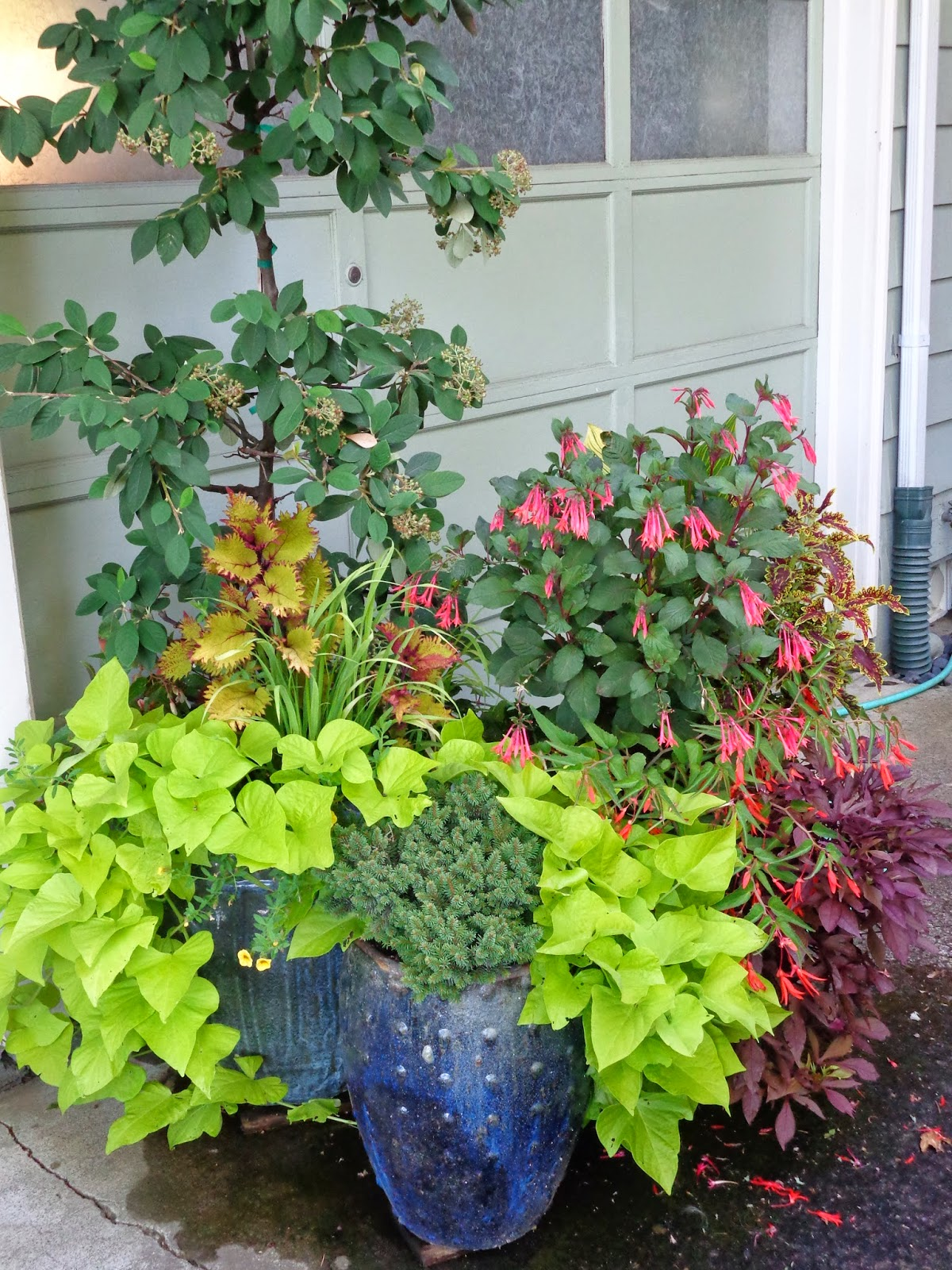 Random acts of gardening container combinations - Best flower combinations for containers ...