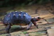 Turtle Trot SAL 2014