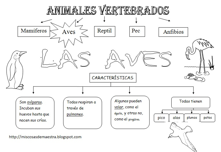 Animales vertebrados e invertebrados para colorear - Imagui