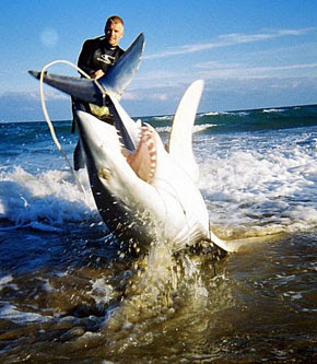 Pin sharks eating people facebook pictures on pinterest for Shark rigs for surf fishing