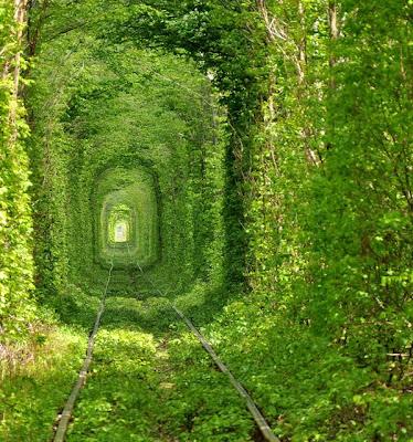 Túnel de árboles en Ucrania - Tree Tunnel Rivne Ukraine