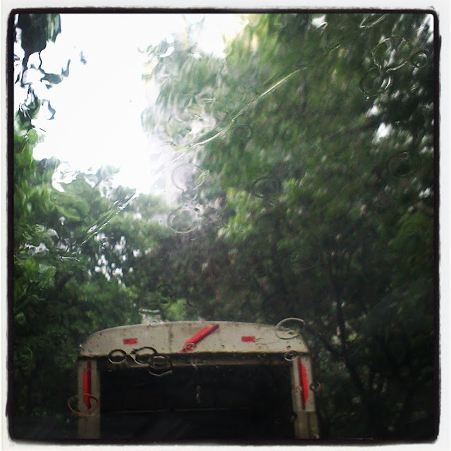 Drive through a green leafy avenue with the rains