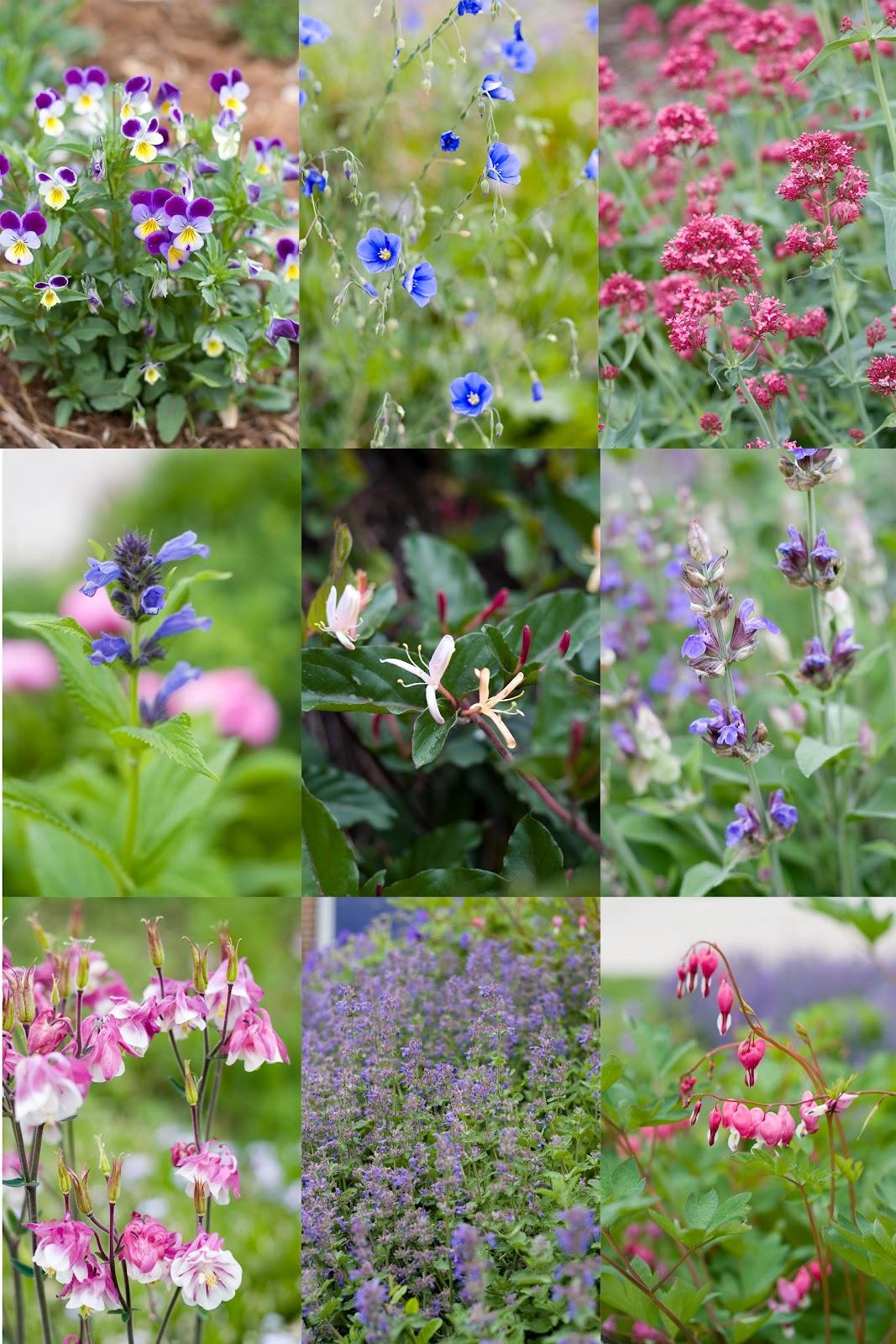 Boy heaven garden of flowers