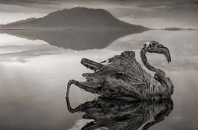 حقيقه البحيره التى تحولك الى حجر اذا لمستها ؟!