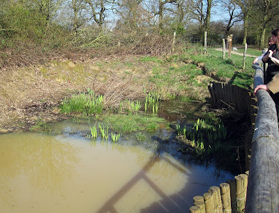 The Loosestrife Pond in Jubilee Country Park in March 2011
