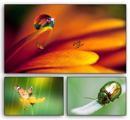 ... alam terasa Menikmati keindahan kupu kupu dari dekat di hadapan kita