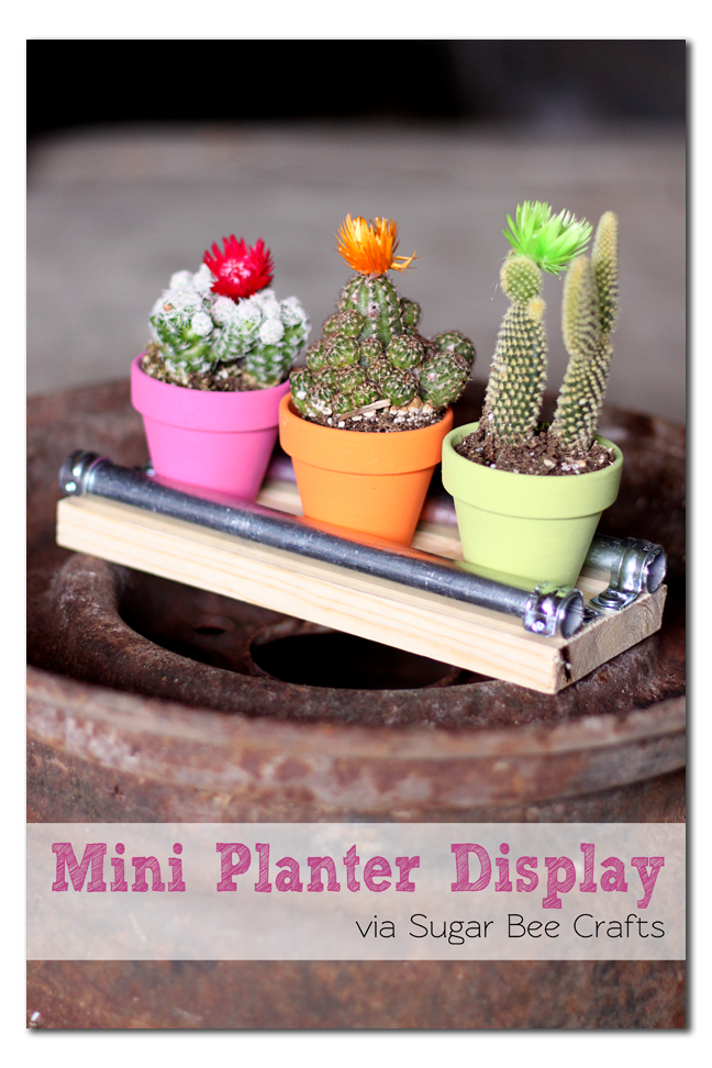 mini+planter+cactus+display+board.png