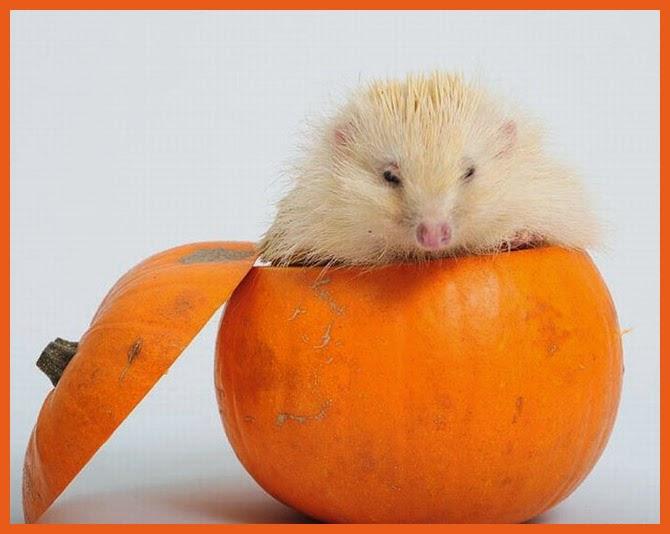 Funny halloween animals 22