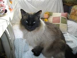 Admiral Fluffy