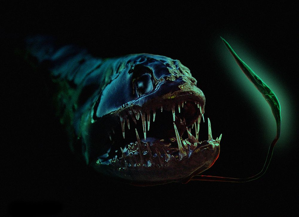 black water dragon fish