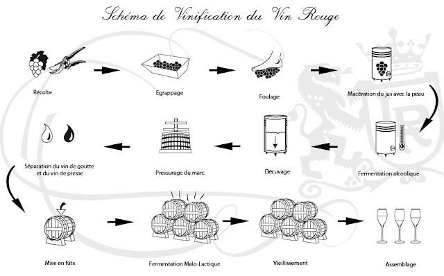 Souvent Technique et étapes de vinification du vin rouge | Cinq semaines  VI71