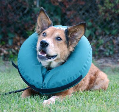 ZenPet ProCollar recovery collar surgery cone