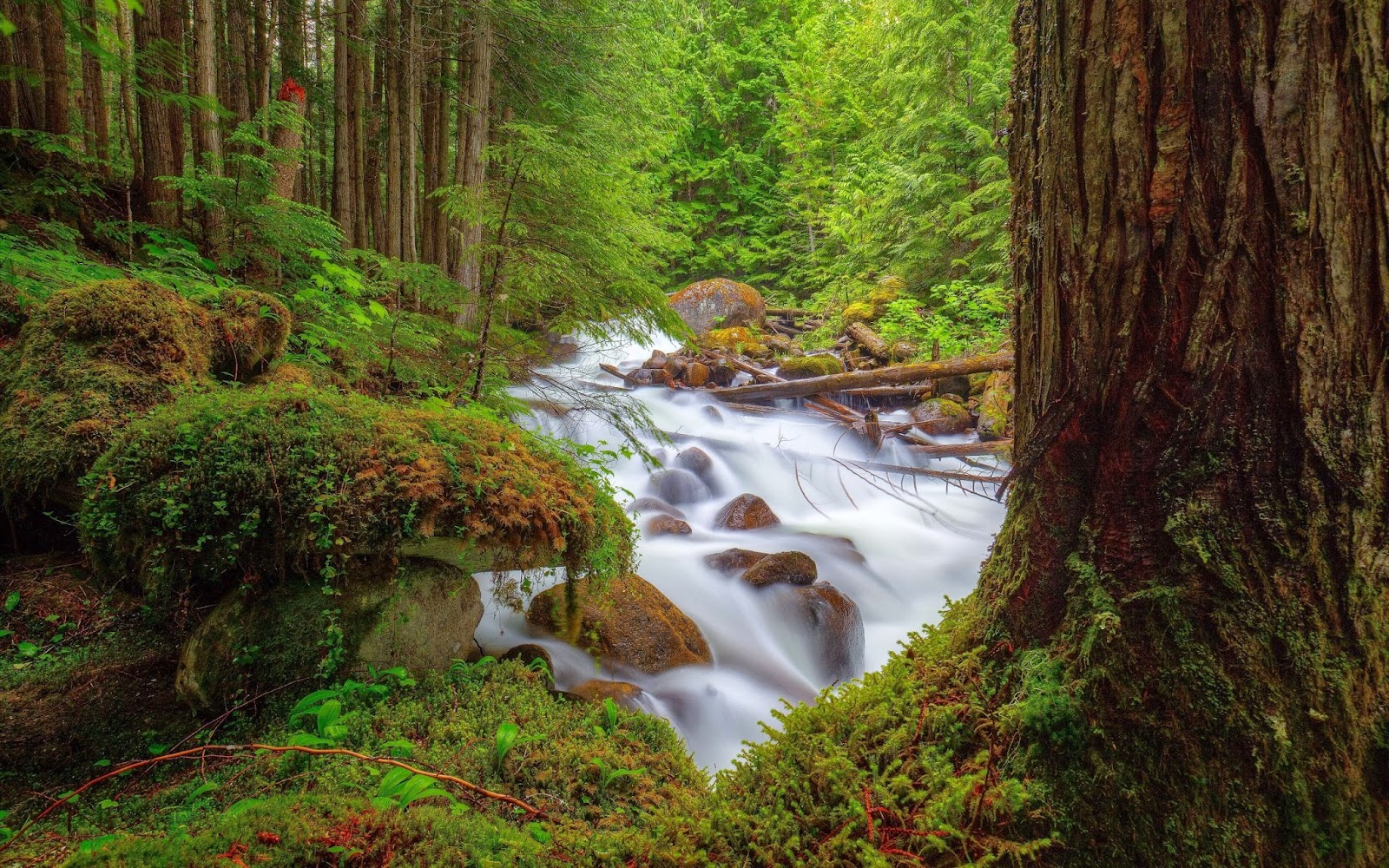 Nature images hd wallpapers images for tsu images - Nature wallpaper status ...