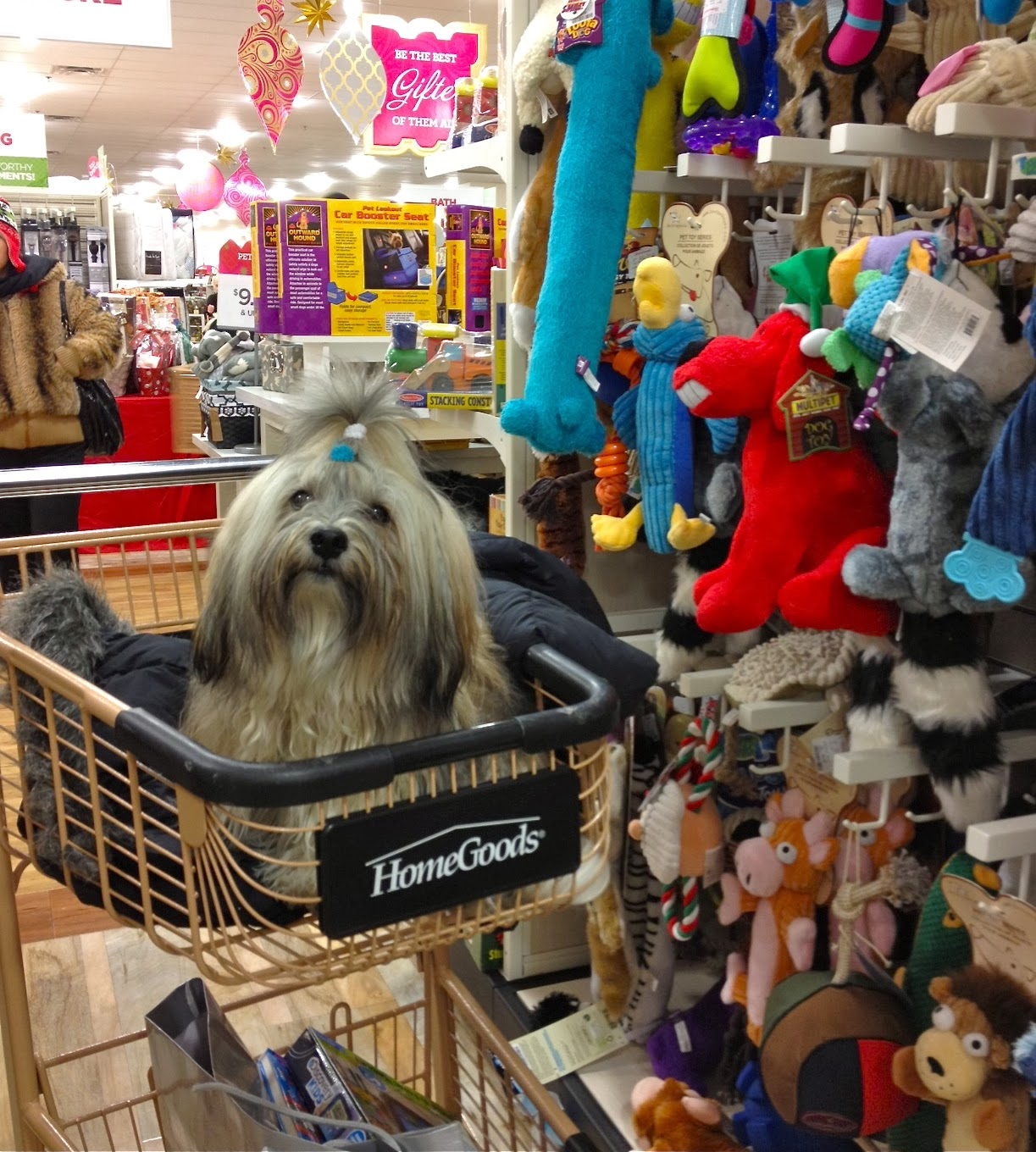 Dog-Friendly Shopping at Home Goods