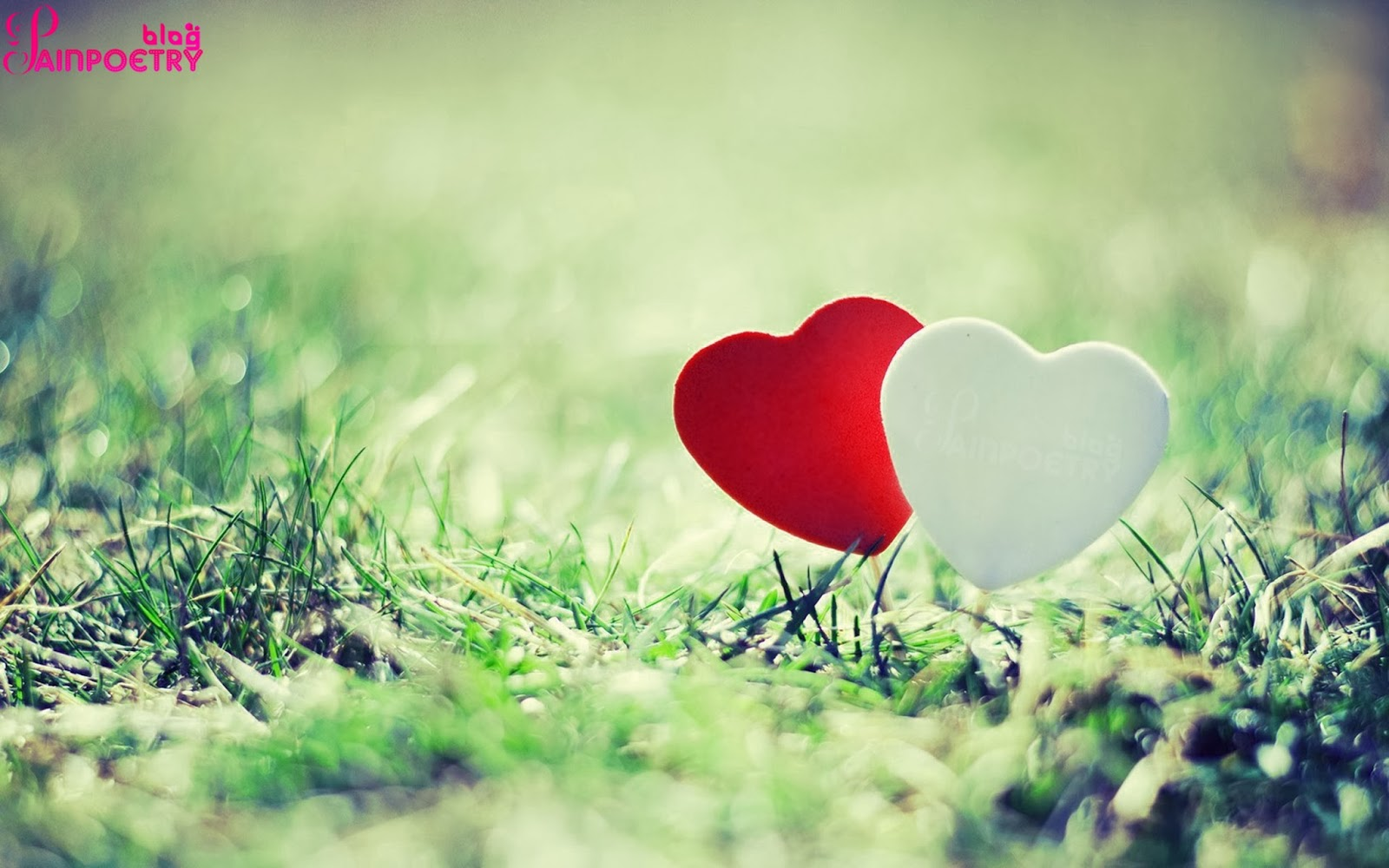 Two-Hearts-Loving-In-Grass-Image-HD