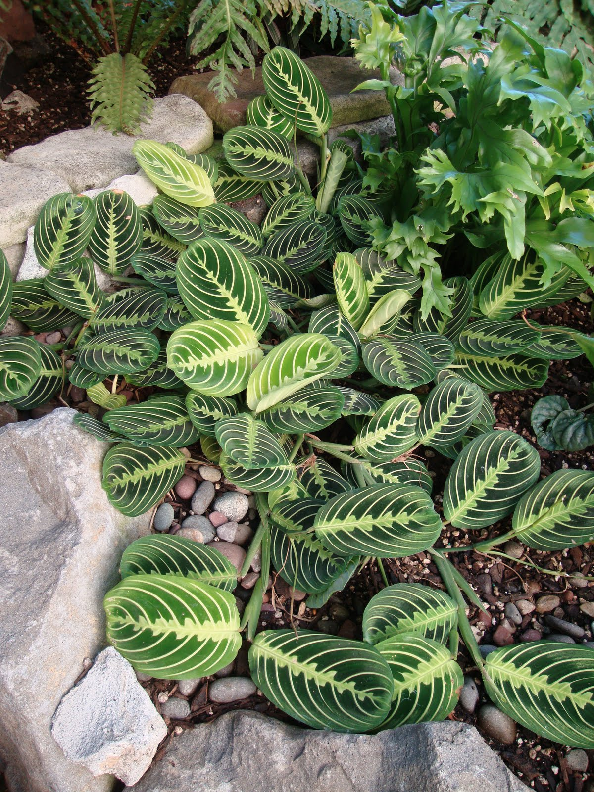 Danger garden a little escapism - Name of house plants ...