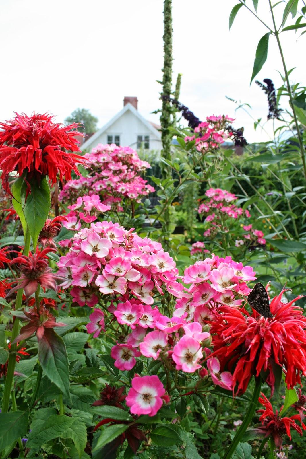 temynta monarda gardenview scarlet