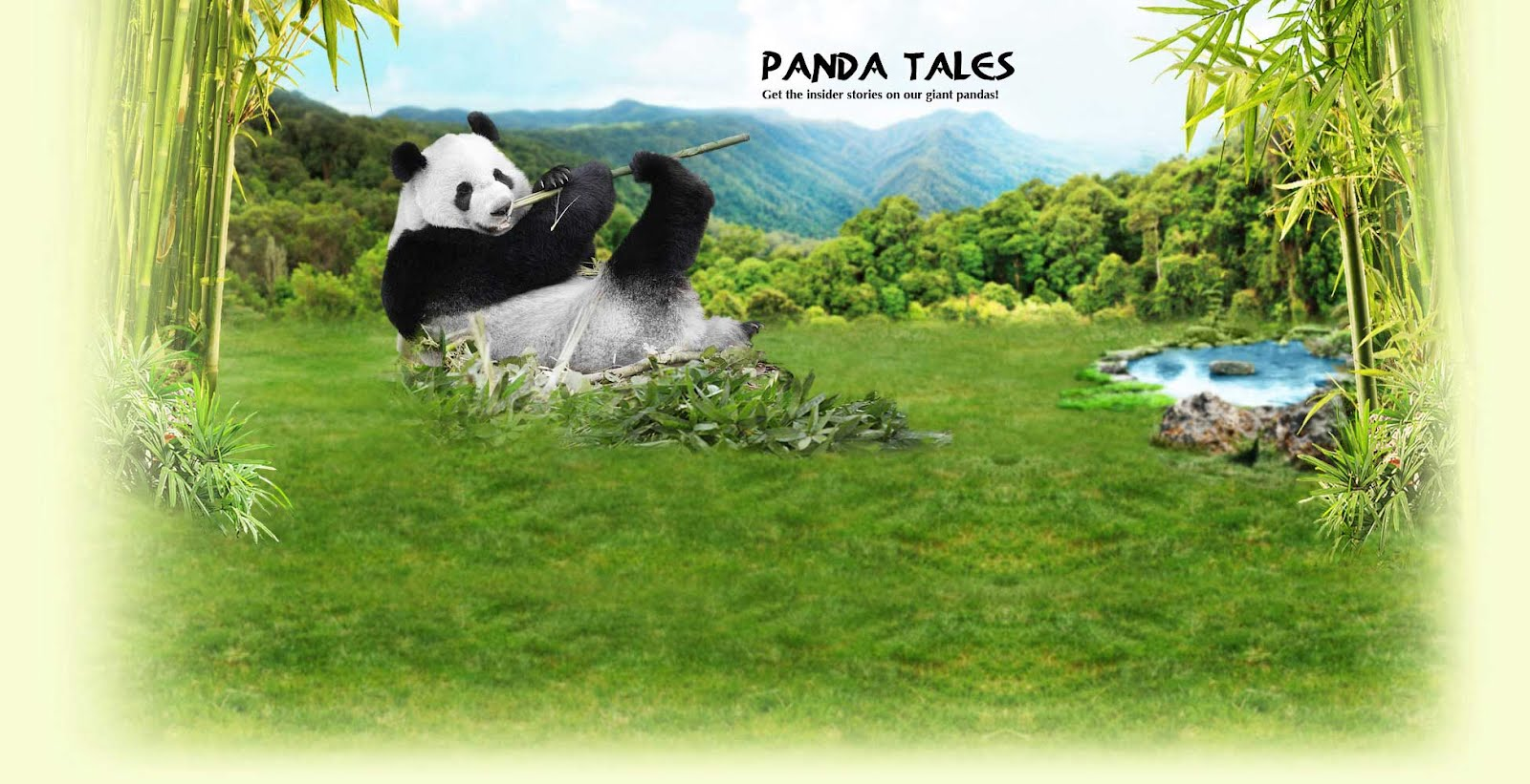 Panda TALES - Get the insider stories on our giant pandas!
