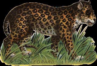 Kociaki