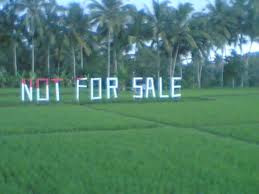 Rice field in Ubud not for sale