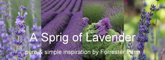 A Sprig of Lavender