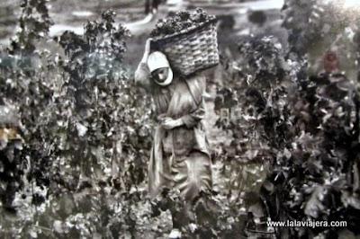 Fotografías Vino, Enrique Paternina