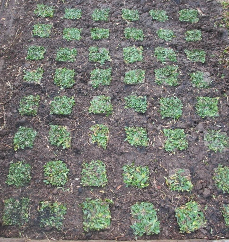INFO SEPUTAR RUMAH: Cara Merawat Rumput Taman