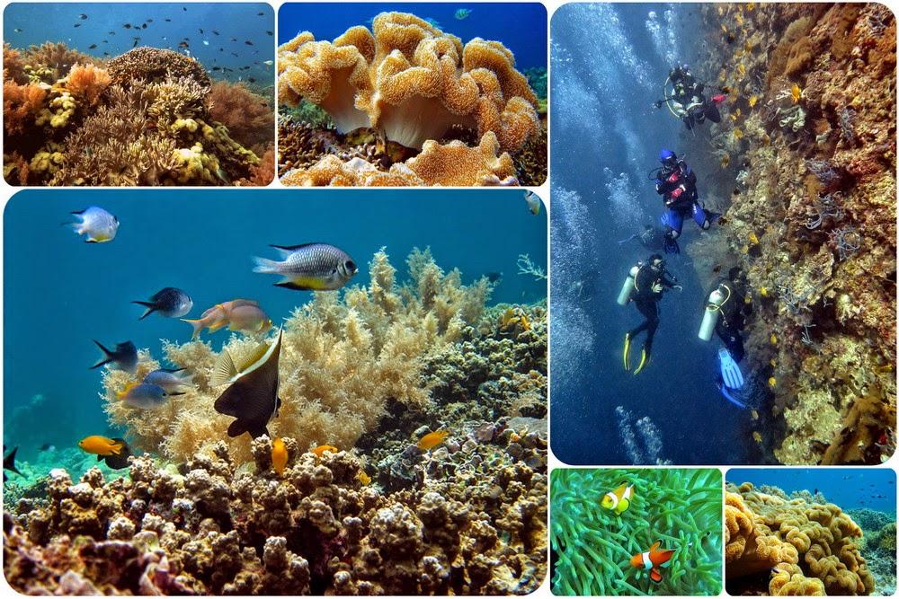 Keindahan Bawah Laut Pulau Menjangan Bali