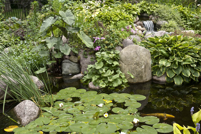 Aquascape your landscape designing your dream pond for Garden pool ecosystem
