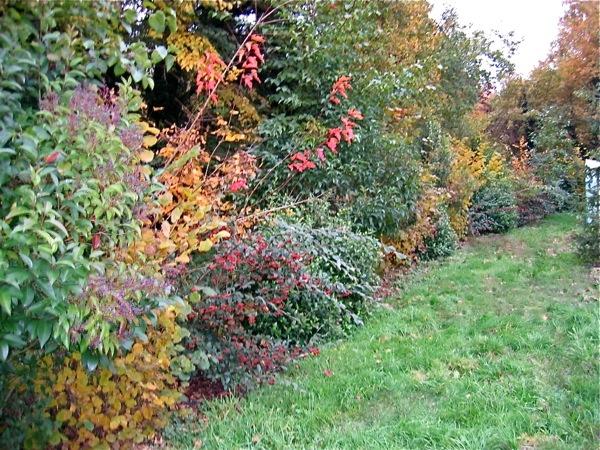 Ma Terre de Bruyère: La haie champêtre ....