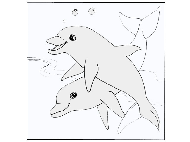 Pictures Of Dolphins To Color