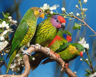 HD Birds Wallpaper