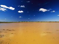 Austrailian Oasis