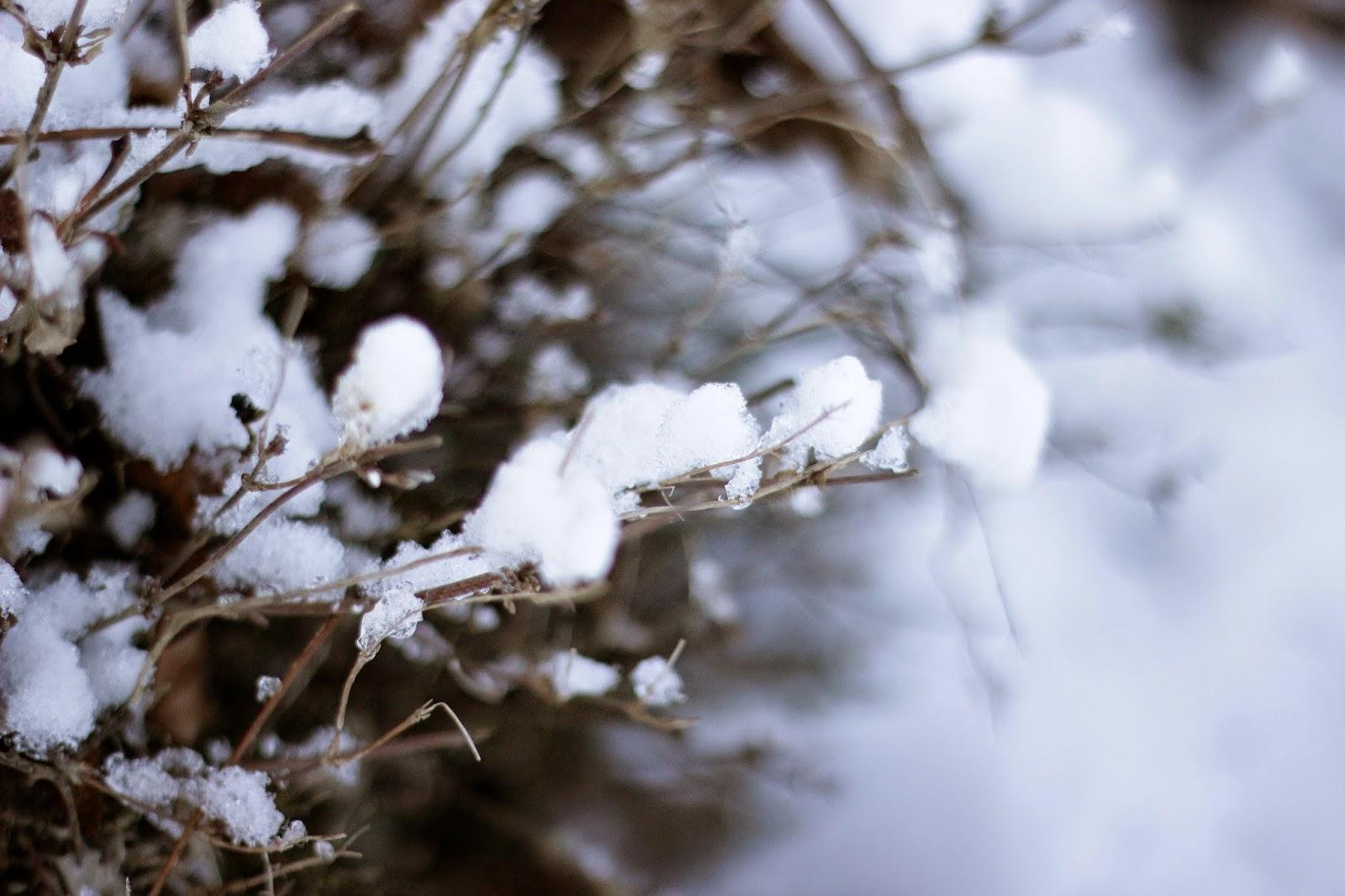 fotografie sneeuw