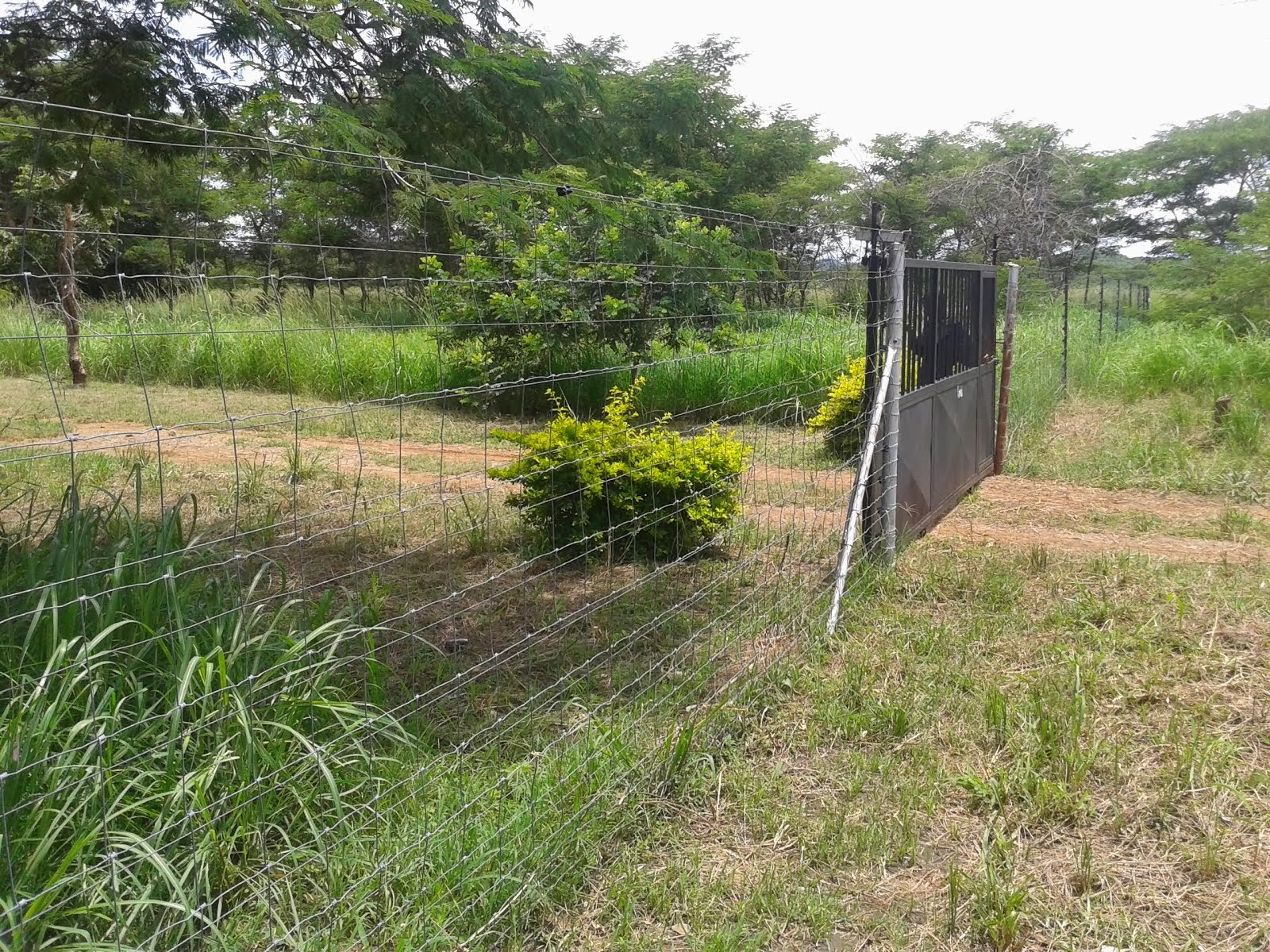 FARMS FOR SALE IN CHISAMBA