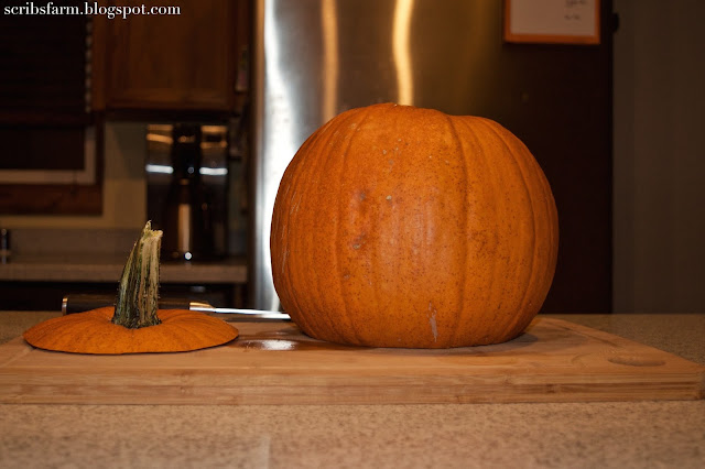 sugar pumpkin recipe