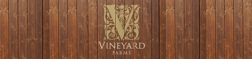 Vineyard Farms Longhorns