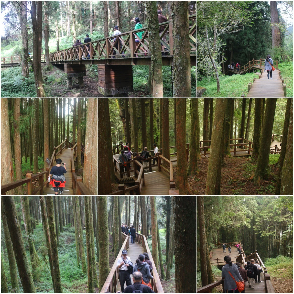Walking along this long wooden bridge which can hold 78 people at Alishan Sacred Tree on top of Alishan Mountain in Chiayi County of Taiwan