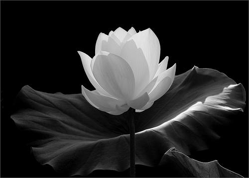 rule of thirds Flower