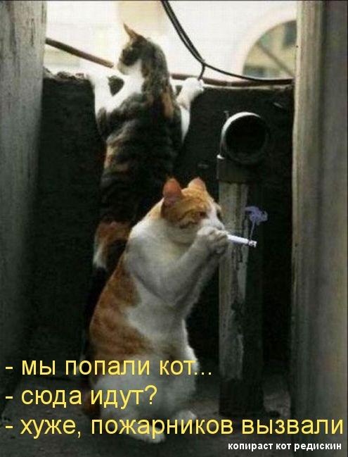 Котоматрица: мы попали кот - сюда идут - хуже, пожарников вызвали