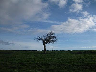 Brouill-arbre